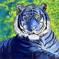 blue-tiger