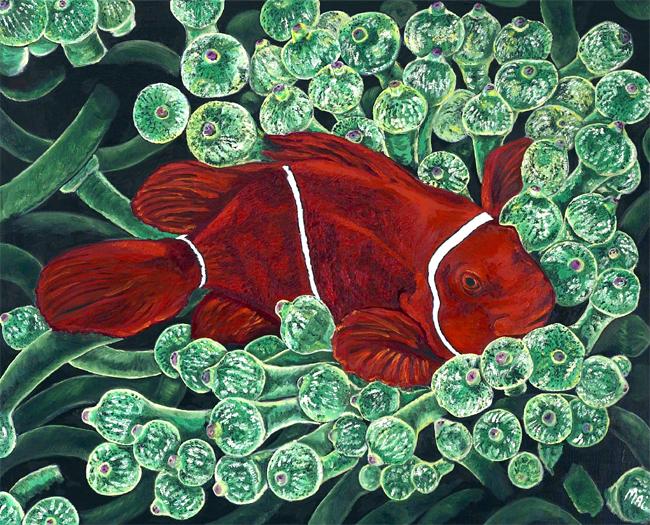 Red Coralfisch
